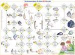 Bestimmungsbogen für kleine Wattforscher